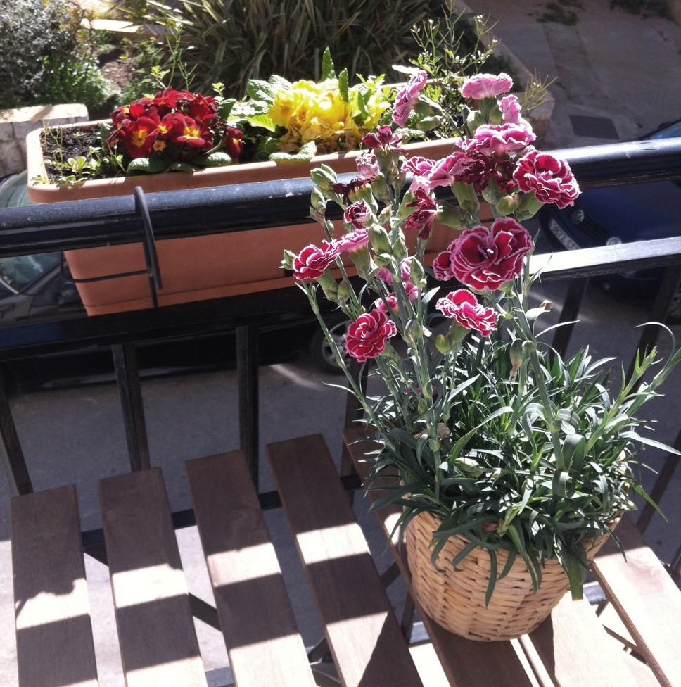 primavera a casa 2